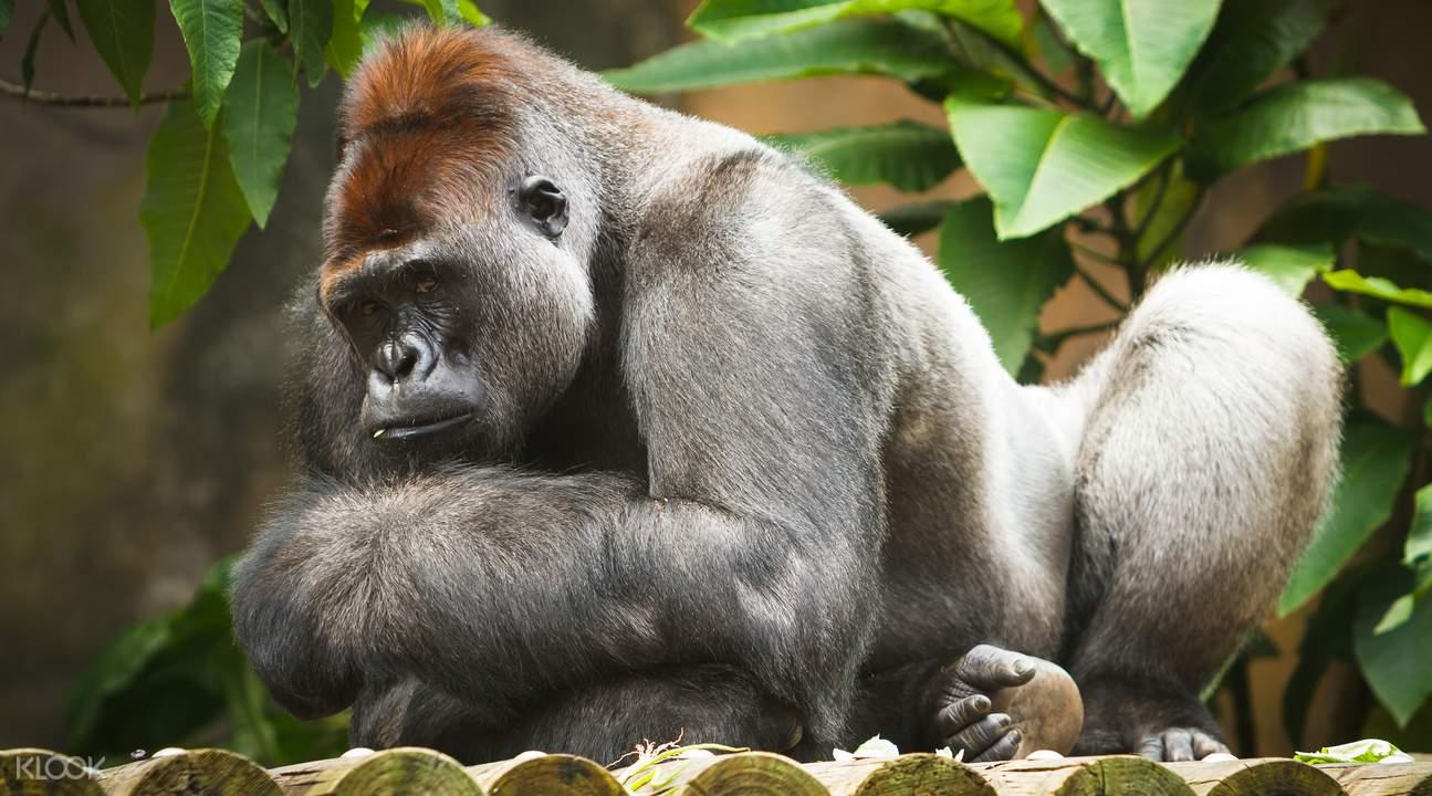 塔龙加野生动物园缆车之旅 & 与考拉合照